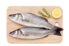 Fresh sea bass. On white background Stock Image