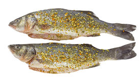 Fresh sea bass for baking-isolated Stock Photography