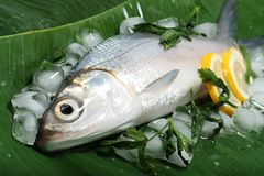 Fresh Sea Bass on Banana Leaf Royalty Free Stock Images