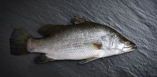 Fresh sea bass fish for cooking Raw seabass ocean gourmet on dark background in the restaurant royalty free stock photo