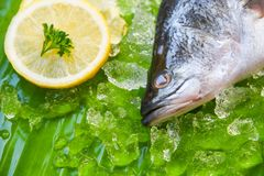 Fresh sea bass fish for cooking / Seafood raw seabass plate ocean gourmet on ice royalty free stock photography