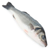 Fresh Sea Bass fish Stock Photos