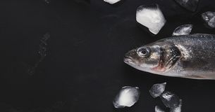 Fresh sea bass head on black background. Raw sea bass head with ice on black background. Minimalistic mockup for seafood restaurant or fish market. Top view royalty free stock photos