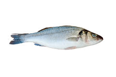 Fresh sea bass isolated Stock Photography