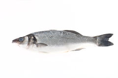 Fresh sea bass on a light background Stock Image