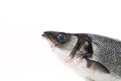 Fresh sea bass on a light background. With space for text Royalty Free Stock Photos
