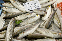 Fresh sea bass at market stall Royalty Free Stock Images