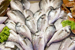Fresh sea bass at market stall Royalty Free Stock Photos
