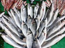Fresh Loup de Mer, Mediterranean sea bass Stock Image
