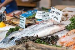 Fresh sea bass and seafood at market counter. Royalty Free Stock Image