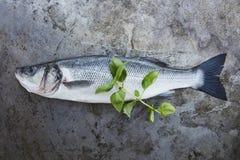 Fresh sea bass. Shot from a high angle stock photo