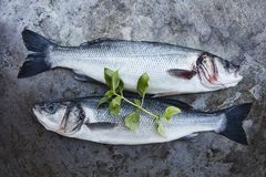 Fresh sea bass. Shot from a high angle stock images