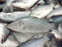 Fresh Sea Bass. Sold in the Asian market stock photo