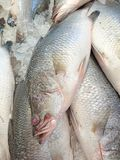 Fresh Sea Bass. Sold in the Asian market royalty free stock photography