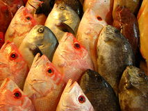 Fresh Sea Basses or Grouper Fish Royalty Free Stock Photos