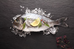 Fresh sea bream cooling on crushed ice Stock Images