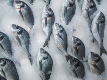 Fresh sea bream on counter Royalty Free Stock Images