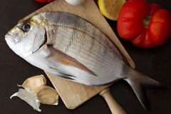 Fresh sea bream fish (Sargo) on board Stock Images