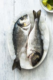 Fresh sea bream on ice Royalty Free Stock Photography