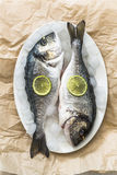 Fresh sea bream on ice Royalty Free Stock Images