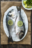 Fresh sea bream on ice Royalty Free Stock Image