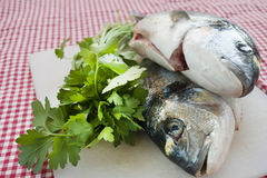 Fresh sea bream just caught Stock Image