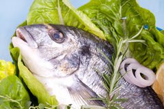 Fresh sea bream with lemon and green salad. In a white old pot, Gilt-head bream ready to cook on blue wooden board stock photo