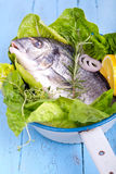 Fresh sea bream with lemon and green salad. In a white old pot, Gilt-head bream ready to cook on blue wooden board Royalty Free Stock Photo