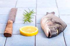 Fresh sea bream with lemon and rosemary. And a knife, Gilt-head bream on a blue tiled table, ready to cook stock photography