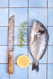 Fresh sea bream with lemon and rosemary. And a knife, Gilt-head bream on a blue tiled table, ready to cook royalty free stock photography