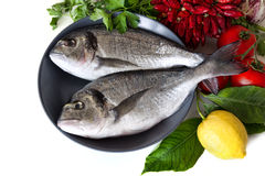Fresh sea bream on plate Stock Photography