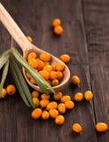 Fresh sea-buckthorn berries in wooden spoon Stock Photo