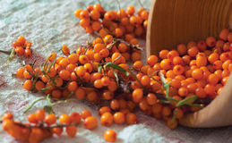 Fresh sea buckthorn on linen fabric Royalty Free Stock Photo