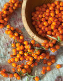 Fresh sea buckthorn on linen fabric Stock Image