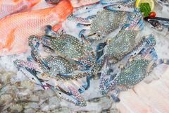 Fresh sea crabs on ice.  Stock Image