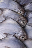 Fresh sea fish Stock Photo