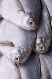 Fresh sea fish Royalty Free Stock Images