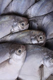 Fresh sea fish Stock Photos