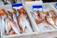 Fresh sea fish on ice plateau. Crete, Greece. Fresh sea fish, Dorado, sea bass, perch on an ice plateau in the street fish shop. Mediterranean cuisine and Royalty Free Stock Images