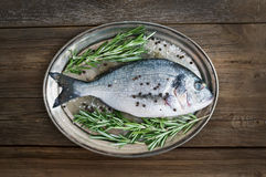 Fresh sea fish (dorado) on a metal dish with rosemary and spices Stock Photo