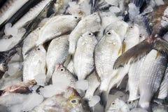 Fresh sea fish at the fish market. Shallow depth of field Stock Photos