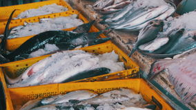 Fresh Sea Fish in Ice on the Counter Market stock footage