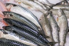Fresh sea fish on ice in supermarket. healthy food.  Royalty Free Stock Images
