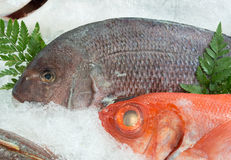 Fresh sea fish in the ice tray Stock Photography