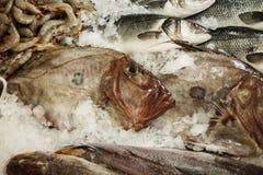 Fresh Sea fish John Dory, St Pierre Stock Photo