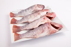 Fresh sea fish Royalty Free Stock Photos