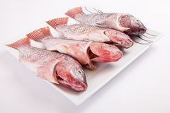 Fresh sea fish Royalty Free Stock Photography