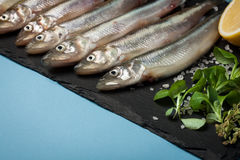 Fresh sea fish smelt or sardines ready for cooking with lemon, thyme, and coarse sea salt on a blue background. The concept of fre Royalty Free Stock Images