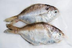 Fresh sea fish. Soup or fry Royalty Free Stock Photo
