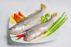 Fresh sea fish. Soup or fry Royalty Free Stock Image